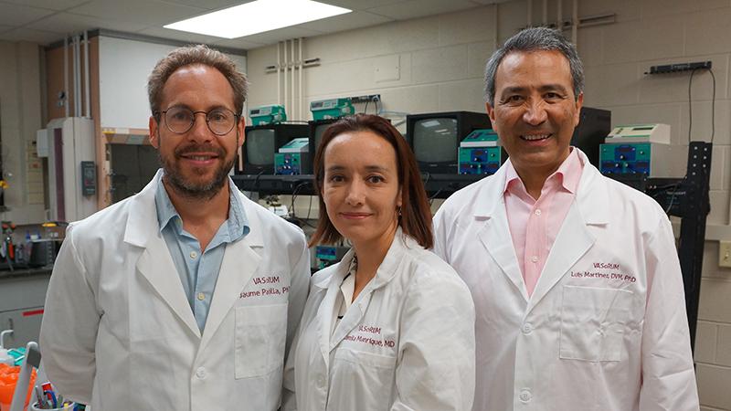 Researchers left to right: Jaume Padilla, PhD; Camila Manrique-Acevedo, MD and Luis Martinez-Lemus, DVM, PhD